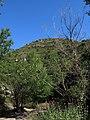009 Vall del Rossinyol, afluent del Tenes, amb la roca Gironella al fons.JPG