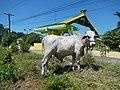 01499jfMapangpang Welcome Licaong Science City Munoz San Jose Nueva Ecijafvf 13.JPG
