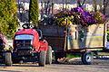 02014 Verwelkte Friedhofsblumen.JPG