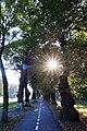 05-101-5001 Вінниця, вікові липи.jpg