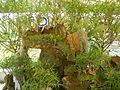 05593jfMidyear Orchid Exhibits Quezon Cityfvf 33.JPG