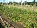 0581jfLandscapes Roads Vegetables Fields Binagbag Angat Bulacanfvf 14.JPG