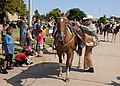 17th Annual Cattle Drive makes its way through Altus Air Force Base 150820-F-HB285-277.jpg