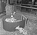 1960 Nurserie à Brouessy Cliché Jean-Joseph weber-4.jpg