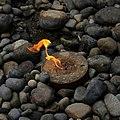 1a Flaming Geyser-001 (7533524518).jpg