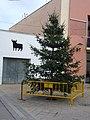2007 12 23 Arbre de Nadal al mig de la plaça de l'Església de Massalfassar.jpg