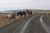 Vatnsnesvegur, Iceland