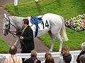 2012 Hippodrome de Longchamp Rond de presentation5.JPG