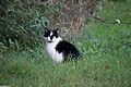 20141102- Black and White Cat by sebaso 02.jpg