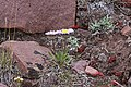 2015.06.27 14.39.28 IMG 2860 - Flickr - andrey zharkikh.jpg