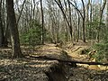 2016-03-01 14 31 44 A trail alongside a severely eroded tributary of Little Difficult Run within Fred Crabtree Park in Reston, Fairfax County, Virginia.jpg
