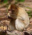 2016-04-21 14-57-47 montagne-des-singes.jpg