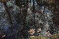 2016-11-25 Yashiro forest park,やしろの森公園 ビオトープ DSCF6010☆彡.jpg