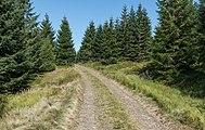 2016 Droga Marianny, Góry Bialskie, Sudety 1.jpg
