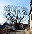 2018-01-10 Winterlinde, Vitusplatz Büren-Hegendorf (NRW) 02.jpg