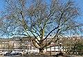 2018-02-24 ND 10 - Essen-Rüttenscheid, Platane.jpg