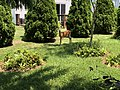 2018-06-01 12 40 47 Deer in a yard along Tranquility Court in the Franklin Farm section of Oak Hill, Fairfax County, Virginia.jpg
