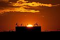 22022012-Coucher de soleil sur Meknès (6820449902).jpg
