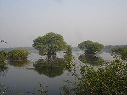 Keoladeo nationalpark i Bharatpurdistriktet.