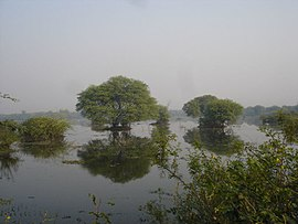 3433- Keoladeo Nature Reserve.jpg