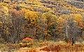 3 Ponds Trail (4) (15018260463).jpg