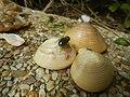 4087Ants Common houseflies foods delicacies of Bulacan 45.jpg