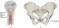 906 Cartiliginous Joints.jpg