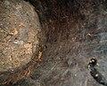 9541 8012525g inside Detail Igala Helmet mask, Nigeria (7688655660).jpg