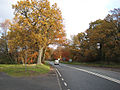 A4136 through the Forest of Dean - geograph.org.uk - 1044963.jpg