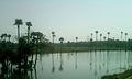 A Lake near Ravikampadu.jpg