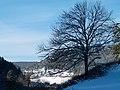 A Lonely Tree - panoramio.jpg