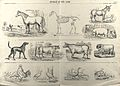 A chart of farm animals consisting of quadrupeds (horse, don Wellcome V0021698.jpg