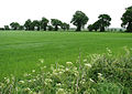 A field boundary marked by trees - geograph.org.uk - 820807.jpg
