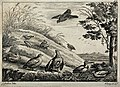 A group of fowl and birds resting and feeding at the bottom Wellcome V0020452.jpg