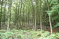 A sample bit of woodland - geograph.org.uk - 975979.jpg