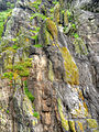 Abstraction on cliff (8045740720).jpg