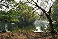 Acharya Jagadish Chandra Bose Indian Botanic Garden - Howrah 2011-01-08 9851.JPG