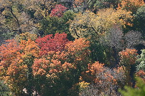 An aerial view of the colorful autumn forest