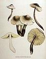 Agaricus cepaestipes — Flora Batava — Volume v16.jpg