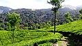 Akkamalai, Valparai - panoramio (1).jpg