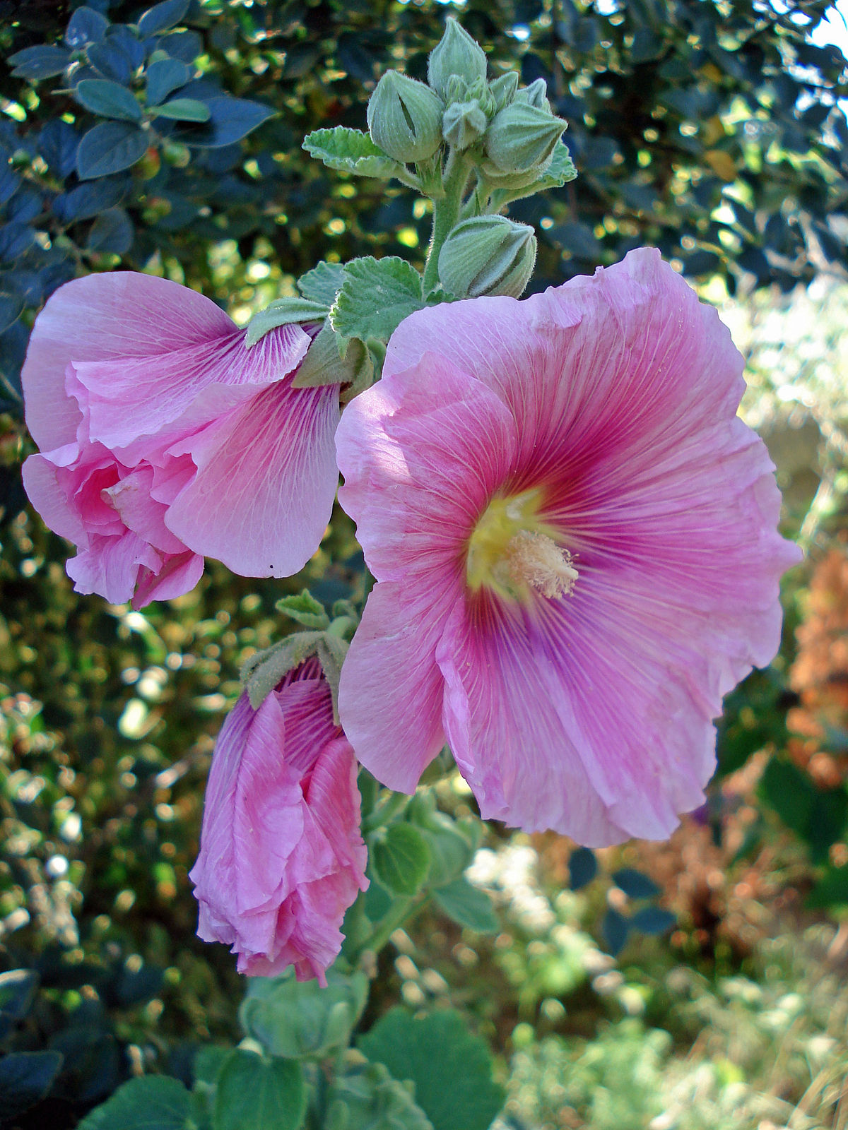 Image Result For Home Garden With Rose