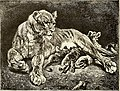 All about animals. Facts, stories and anecdotes (1900) (14774672861).jpg