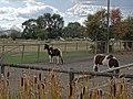 Along Rittich Road - Ellison District - Kelowna - BC - Canada - 10 (37160314840) (2).jpg
