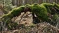 Altwarmbüchener Moor März 2018 (01).jpg