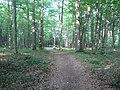 Alytus, Lithuania - panoramio (5).jpg