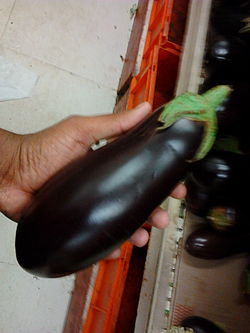 definition of eggplant