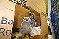 An owl friend (9359522530).jpg