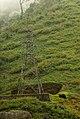 Anamalais, India 0001- D093387.jpg
