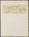 Ancylodon jaculidens - 1700-1880 - Print - Iconographia Zoologica - Special Collections University of Amsterdam - UBA01 IZ13400083.tif