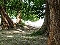 Ao Nang, Mueang Krabi District, Krabi, Thailand - panoramio (9).jpg